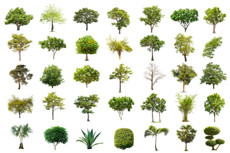Pflanzenwelt-vielfald-bartos-galabau