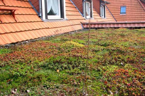 Dachbegrünung - Bartos Flachdach