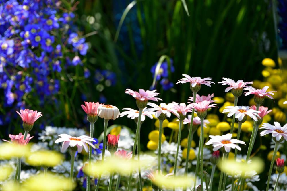 Gartenblumen - Bartos Hagen