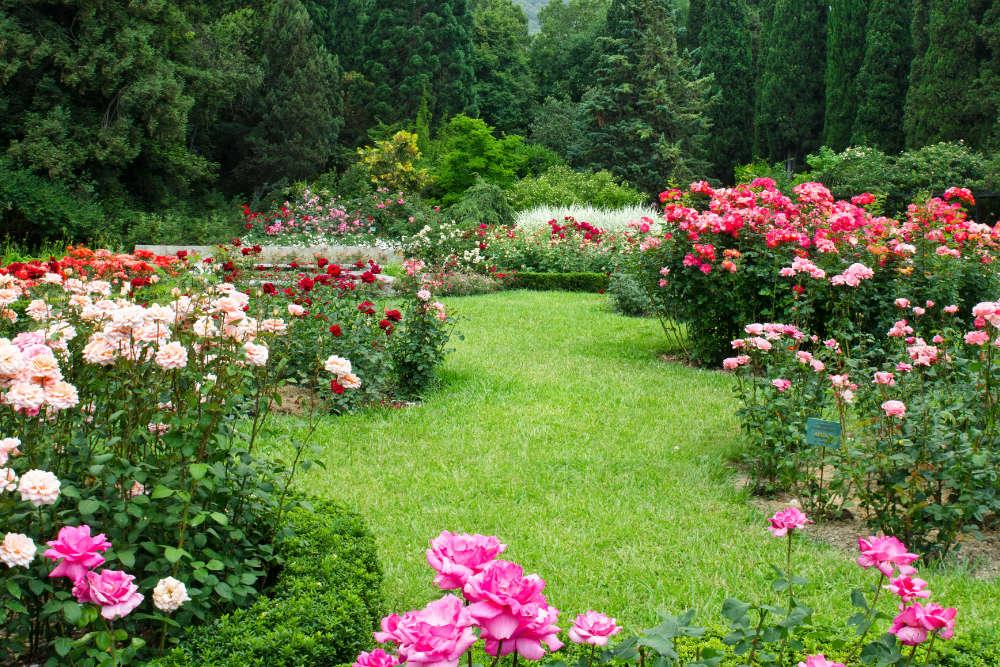 Gartenarbeit im Juli - Bartos Hagen