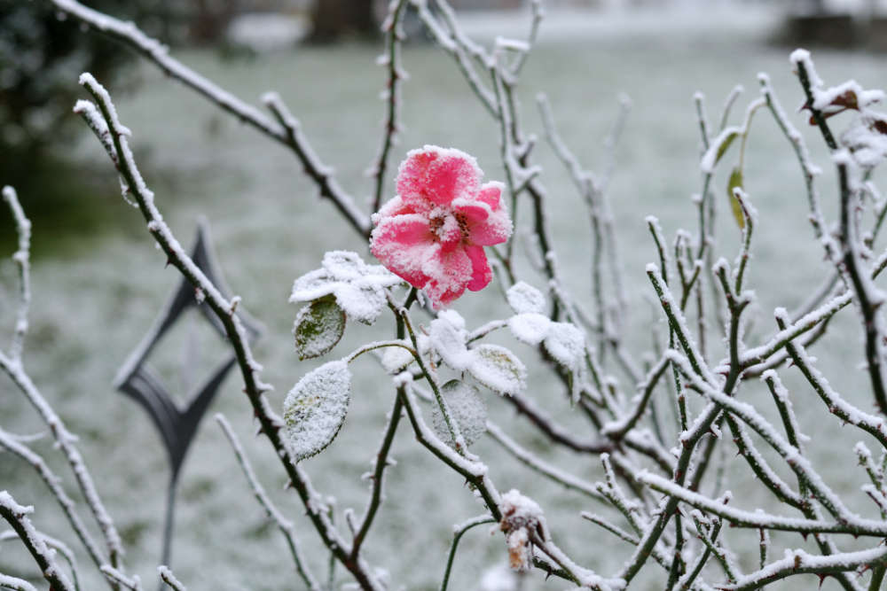 Garten im Januar - Bartos Hagen