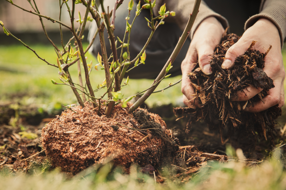 Strauch einpflanzen - Bartos Hagen