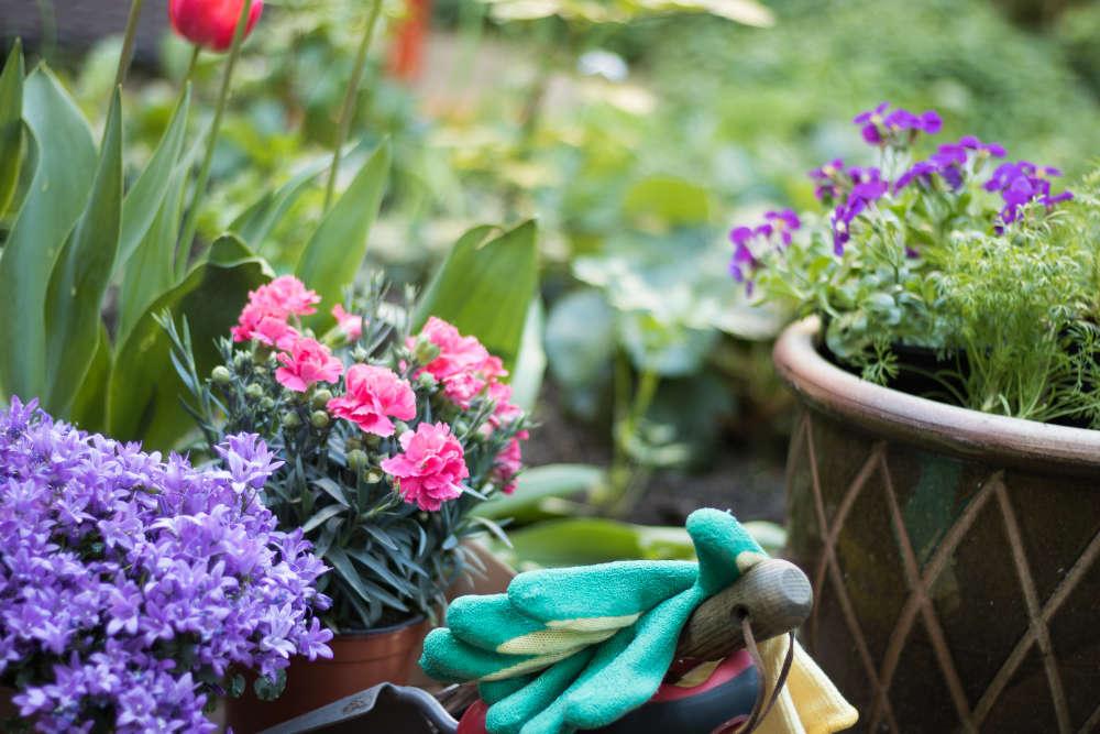 Garten im April - Bartos Hagen