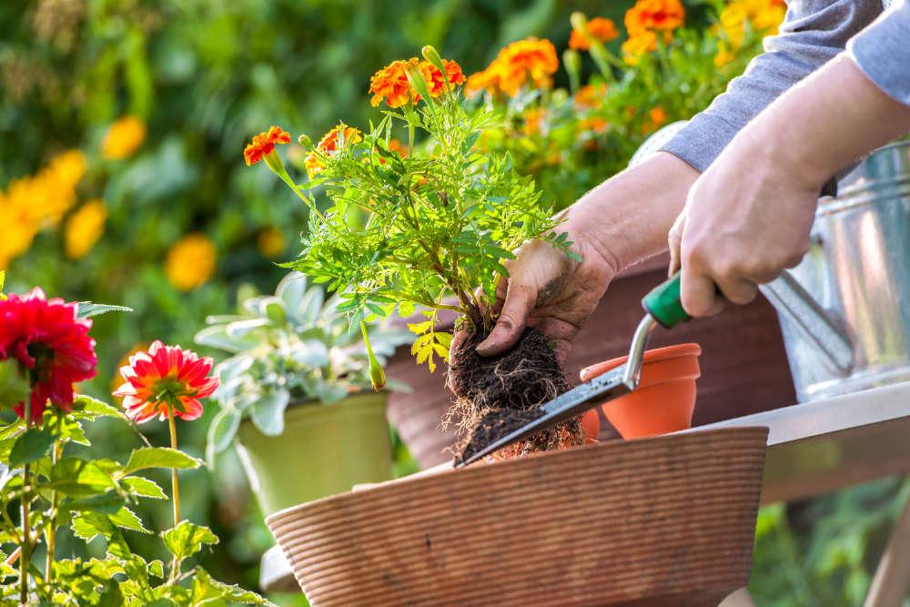 Gartenarbeit Mai - Bartos Hagen