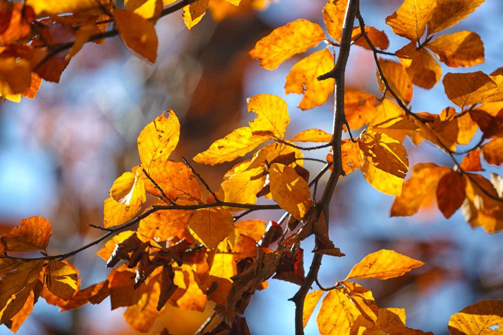 Gartenarbeiten Herbst - Bartos Hagen